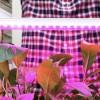 Фитосветильник для растений светодиодный СПБ Т8 ФИТО 15 Вт линейный фото 2