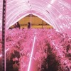 Фитосветильник для растений светодиодный СПБ Т8 ФИТО 14 Вт линейный фото 6