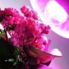 Фитолампа для растений светодиодная LED-A60-9W Е27